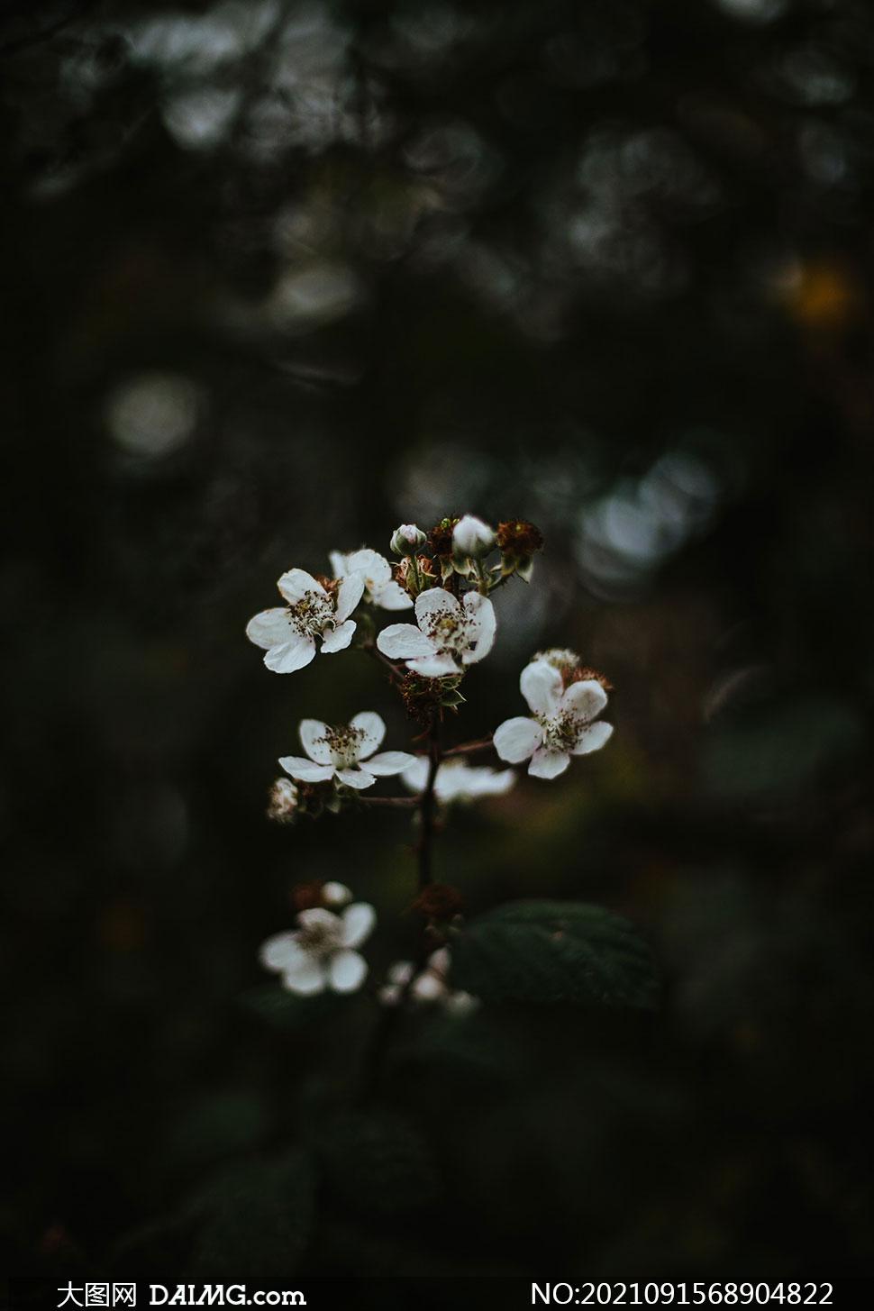 野外白花植物近景特写摄影高清图片