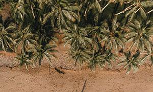 海边沙滩椰树自然风光摄影高清图片