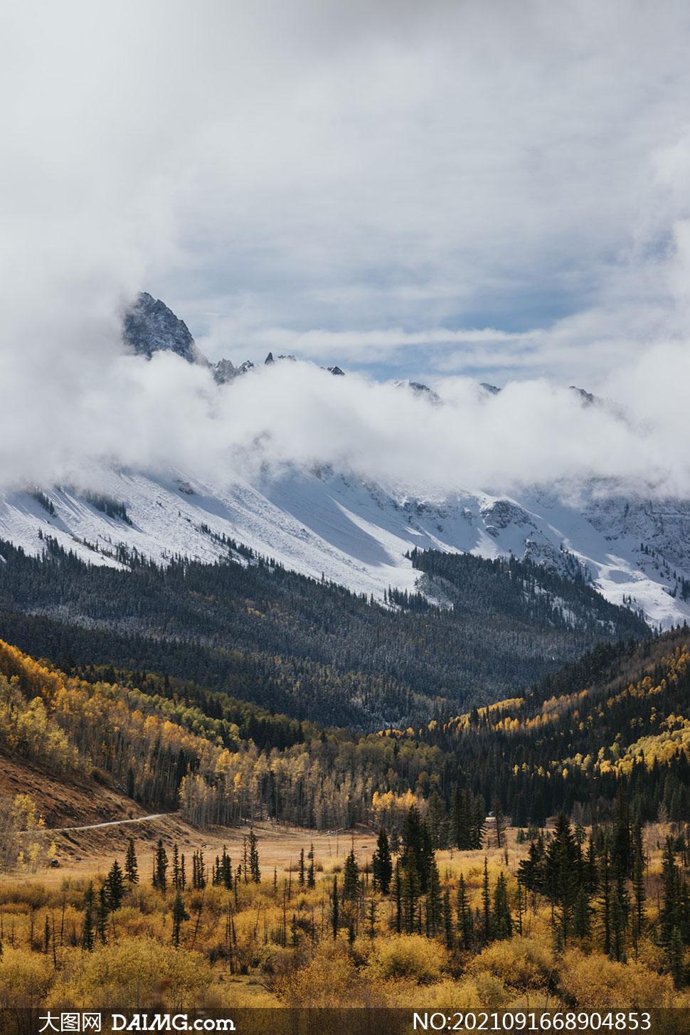 雪山山谷茂密树木风光摄影高清图片