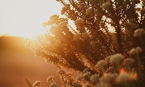 野外花卉植物特写逆光摄影高清图片