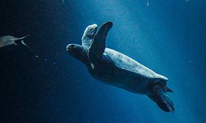 在水中畅游的海洋生物摄影高清图片