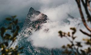 树枝云雾掩映中的大山摄影高清图片