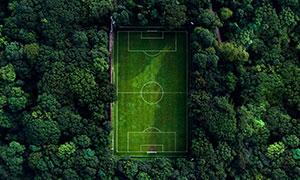 茂密树林环绕的足球场摄影高清图片