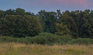 天空云朵树木草丛风光摄影高清图片