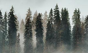 浓雾中的高山树林湖泊摄影高清图片