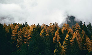 雾中雪山脚下茂密树林风光高清图片