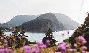湖泊远山与花草丛风光摄影高清图片