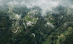 丘陵梯田与茂密的树林摄影高清图片