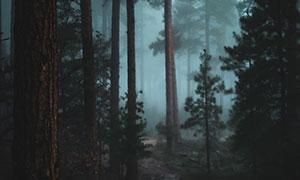 霧氣彌漫昏暗樹林風光攝影高清圖片