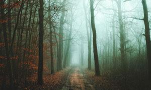 霧氣彌漫樹林小路風光攝影高清圖片