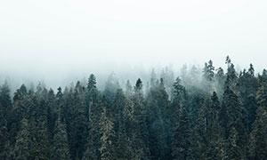 乳白色霧氣下籠罩著的樹林高清圖片