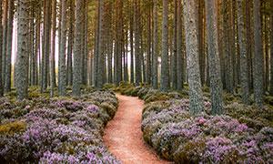 樹林小路花草植物風景攝影高清圖片