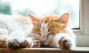 睡意正酣的可愛喵星人攝影高清圖片