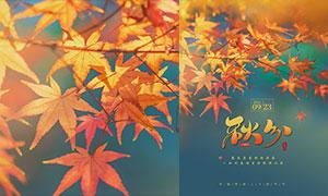 金色枫叶主题秋分节气海报PSD素材