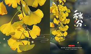 银杏树主题秋分节气海报设计PSD素材