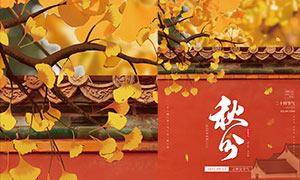 秋叶主题秋分时节海报节设计PSD素材