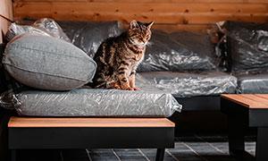沙发上愁容满面的猫咪摄影高清图片