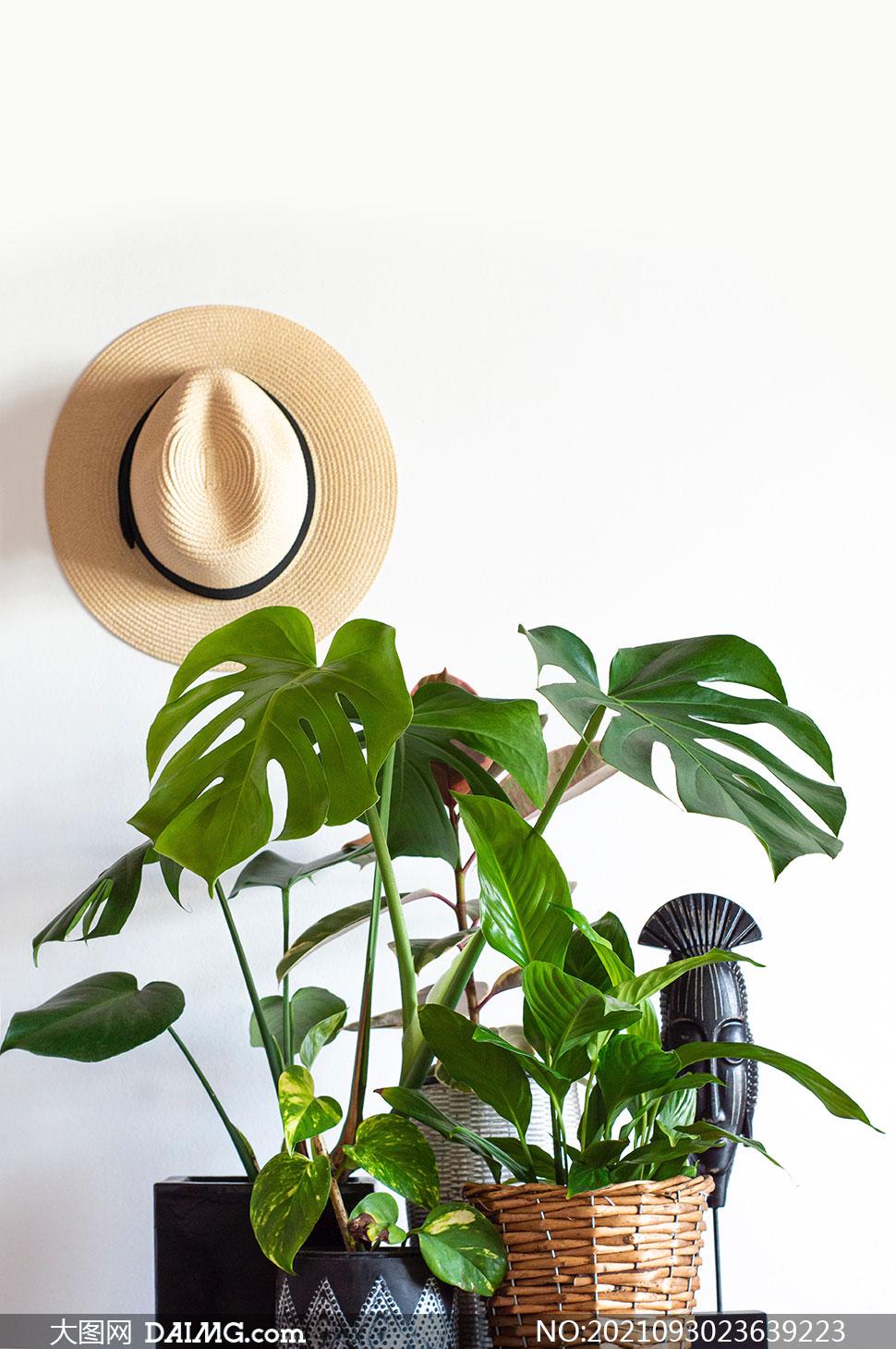 绿叶植物与挂在墙上的帽子高清图片