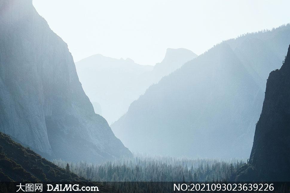 氤氲山间植物自然风景摄影高清图片
